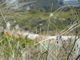 wild flowers in November